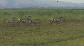 Akagera National Park - 2 hours from ETSK school
